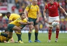 australian rugby wallabies
