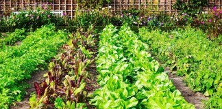 Herbs You Could Grow For Your Garden
