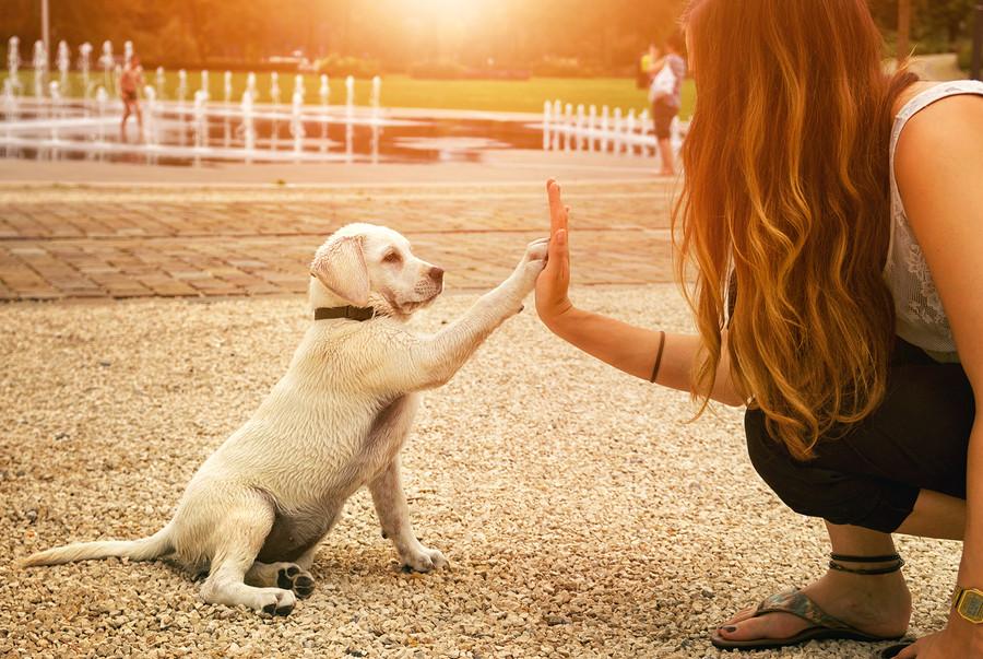 combating pet obesity