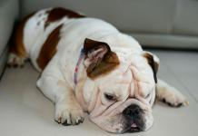 Pet obesity is on the rise - What can be done to stop it?