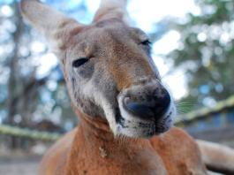 Australia – a must-do destination despite lurking dangers