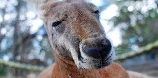 Australia – a must-do destination despite lurking dangers