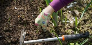 Gardening advocated to boost health
