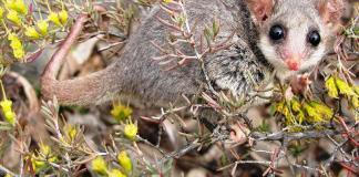 Jobs slashed at Environmental Dep could mean extinction for rare species