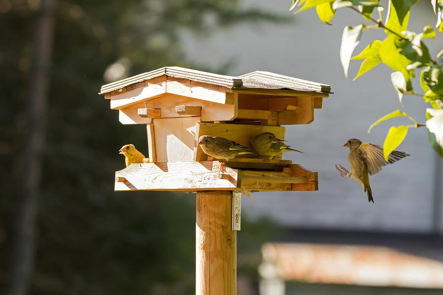 Habitat for birds