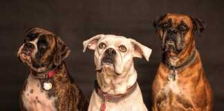 A brief guide to choosing a suitable dog collar