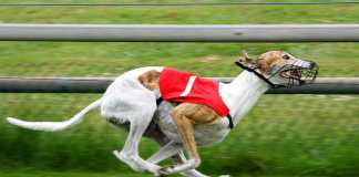 """NSW Government hands 500k """"sorry note"""" to Greyhound racing industry"""
