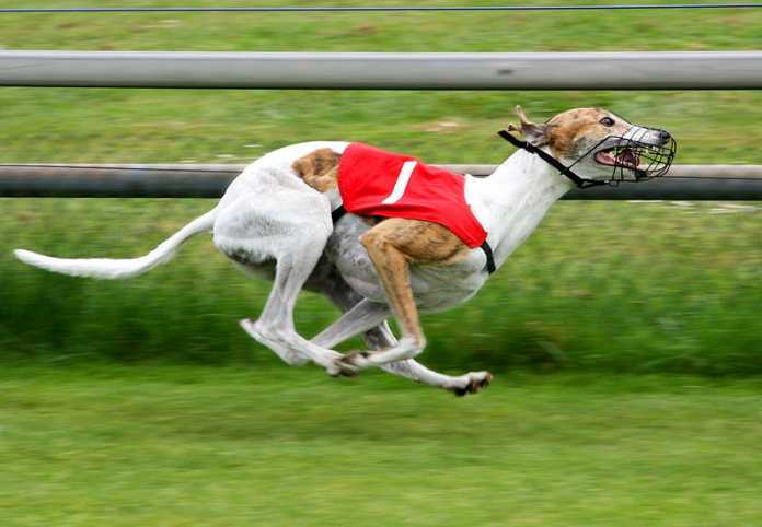 "NSW Government hands 500k ""sorry note"" to Greyhound racing industry"