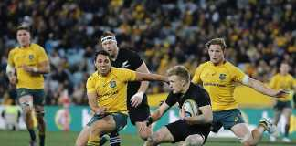 Wallabies try to plug holes as All Blacks prepare for the kill