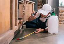 How to get rid of bugs in an apartment