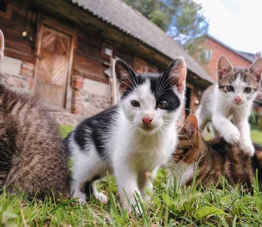 20 most popular cat breeds and their personalities
