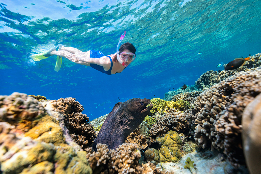 Underwater photo of woman snorkeling in a clear tropical water at coral reef observing moray eel