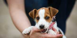 10 tips to stop a puppy biting