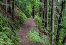 Best Hiking Trails Sydney