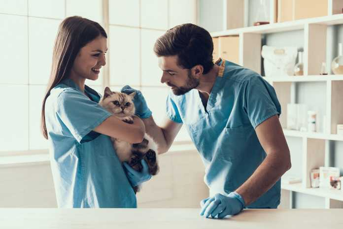 What you need to know about Woolworths pet insurance