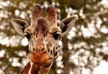 Best Aquariums - Zoos in Sydney