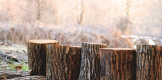 Best Arborists in Sydney