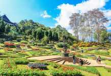 Best Landscaping Companies in Sydney