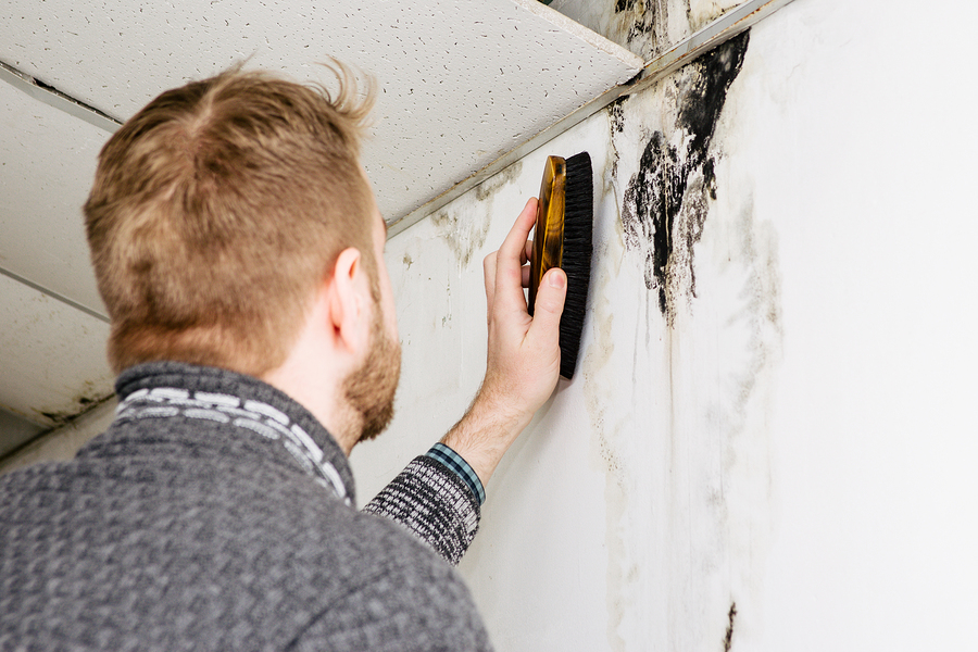Mould and mildew on painted walls