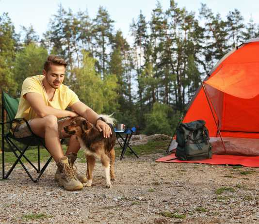 8 tips for camping with your dog