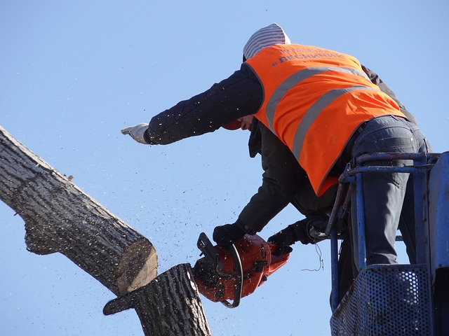 Best Arborists in Hobart