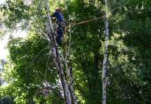 Best Arborists in Perth