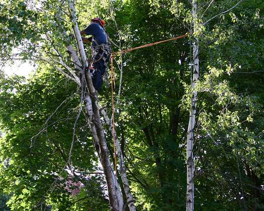 Best Arborists in Perth