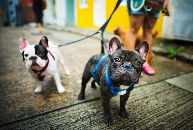 Best Dog Walkers in Sydney