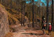 Best Hiking Trails in Brisbane