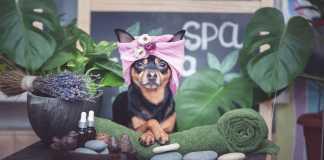 Best Pet Care Centres in Melbourne