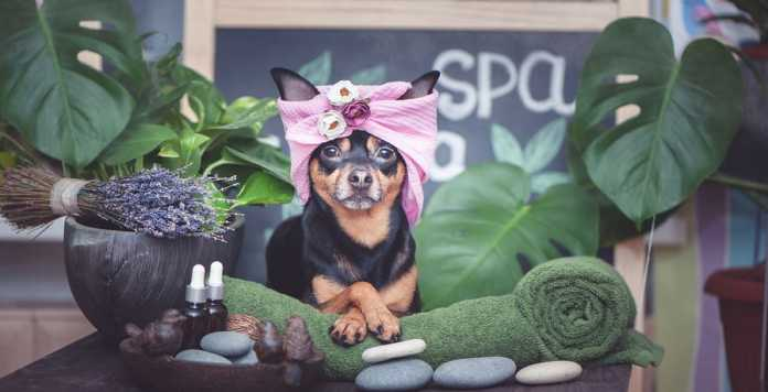 Best Pet Care Centres in Melbourne