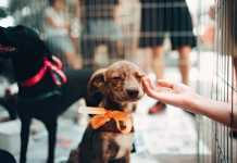 Best Pet Care Centres in Sydney