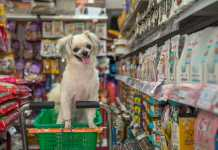 Best Pet Shops in Melbourne