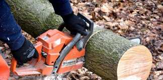 Best Tree Services in Perth