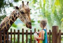 Best Zoos in Adelaide