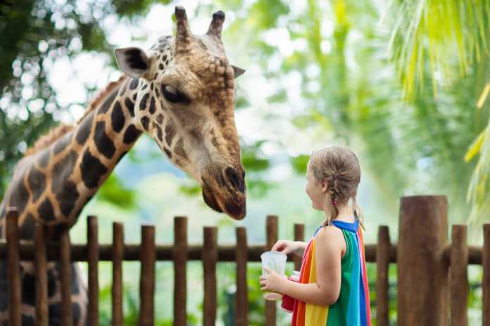 Best Zoos in Adelaide