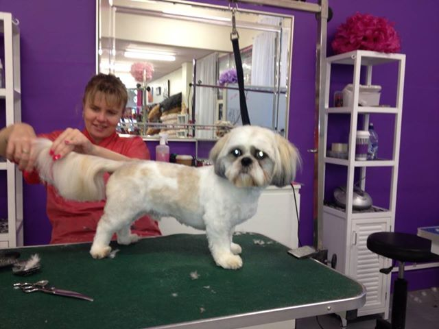 Woofers Dog Grooming