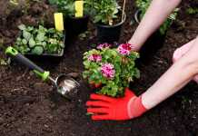 Best Gardeners in Hobart