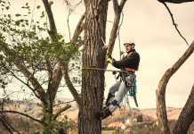 Best Arborists in Melbourne