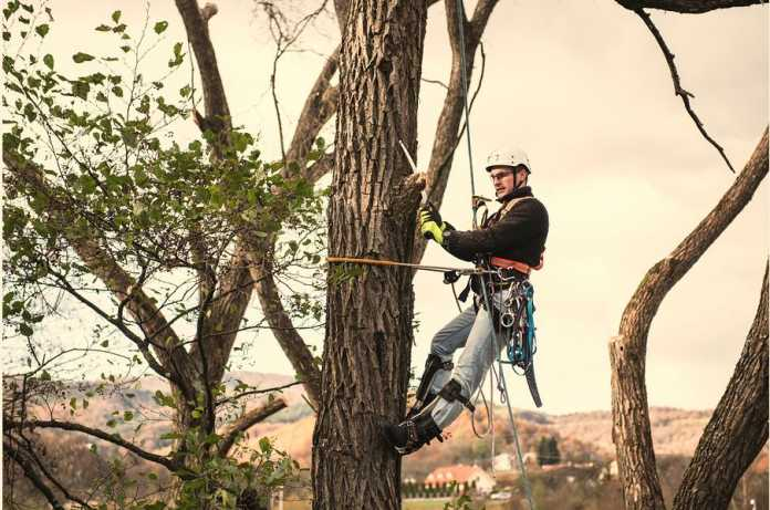 Best Arborists in Melbourne