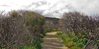 Best Bush Walk Parks in Brisbane