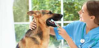 Best Dog Day Care Centers in Melbourne
