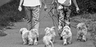 Best Dog Walkers in Brisbane
