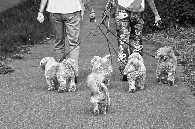 Best Dog Walkers in Brisbane