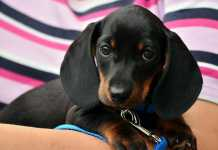 Best Doggy Day Care Centres in Perth