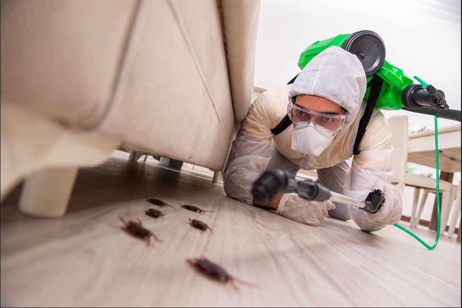 Best Exterminator Companies in Melbourne