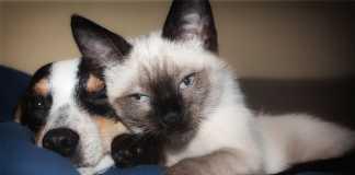 Best Pet Care Centres in Brisbane