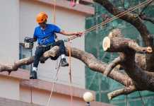 Best Tree Services in Brisbane