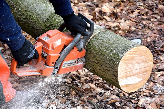 Best Tree Services in Gold Coast