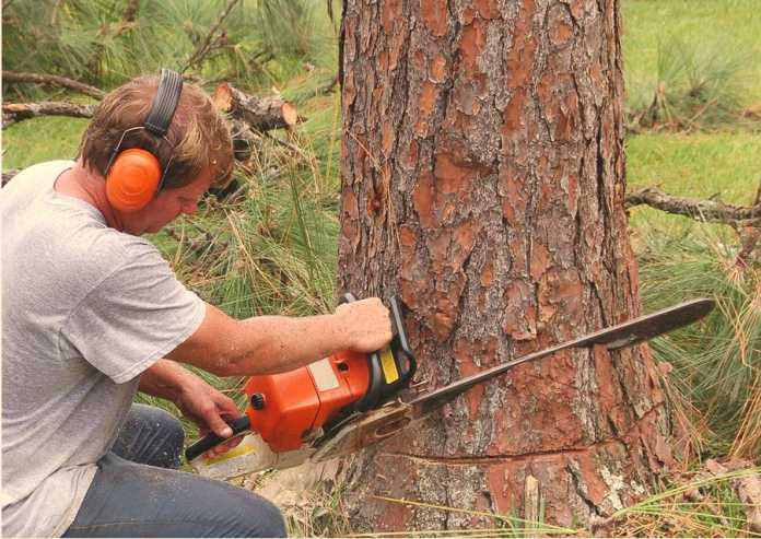 Best Tree Services in Melbourne